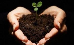 Yusuf Ömer Arıcı - Tohum ve Toprak - Lisanı Aşk Dergisi